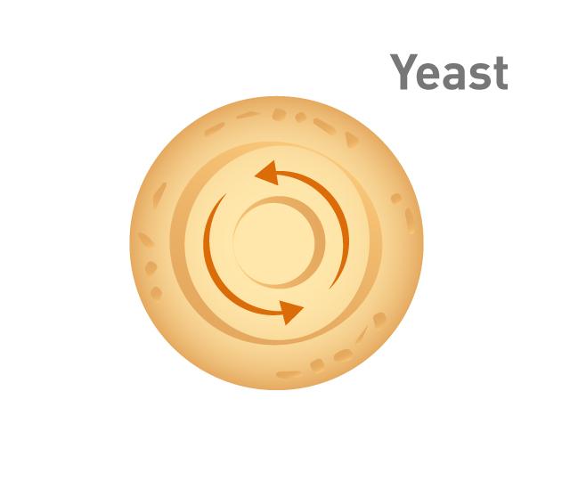 Grafik Herstellung Hefeextrakt Zentrifugierung