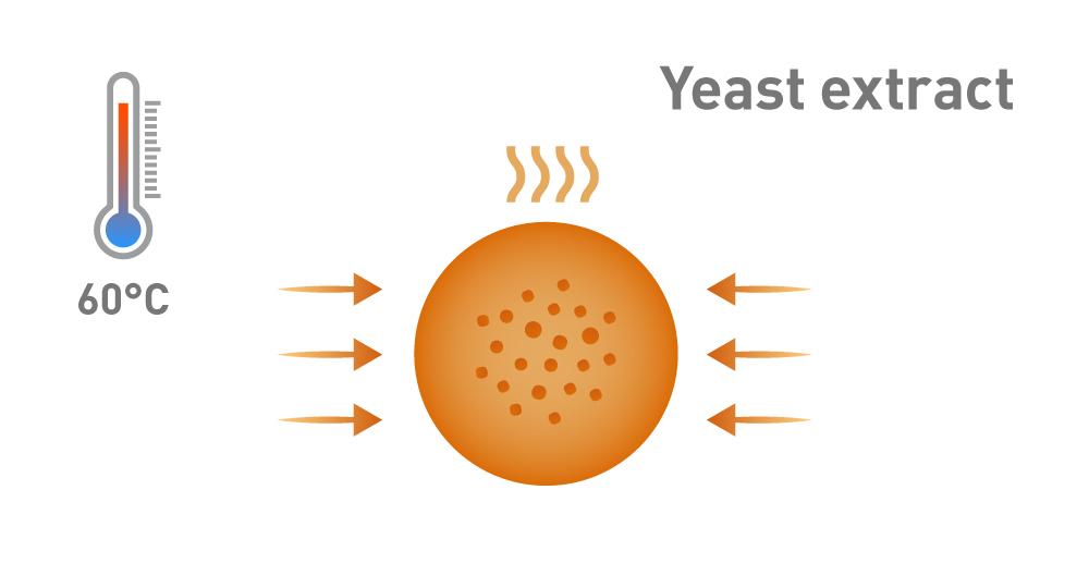 Grafik Herstellung Hefeextrakt Verdampfung und Konzentration